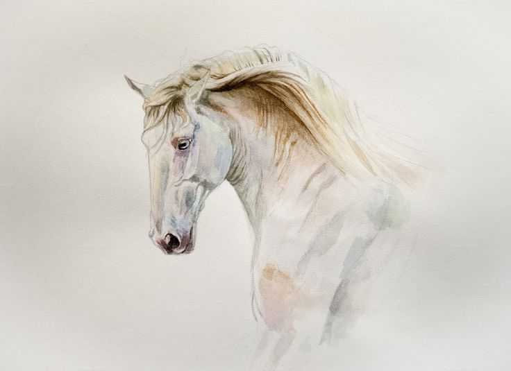 Watercolor horse by Olgait on @creativemarket