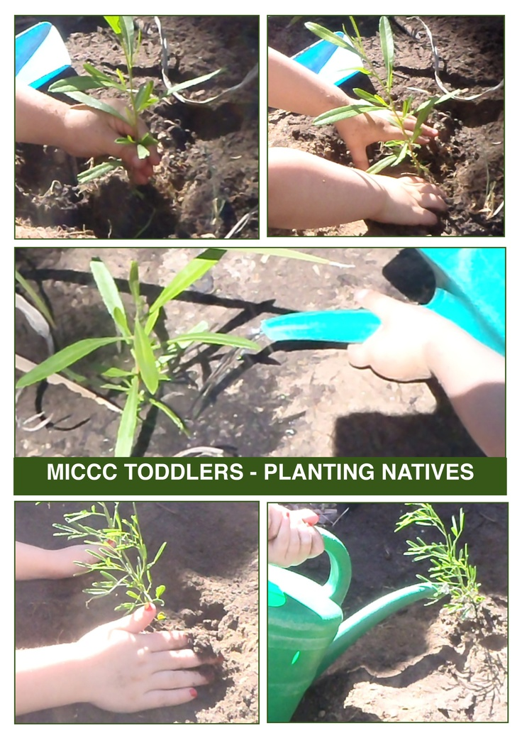 Planting Australian Natives and caring for our Toddler environment