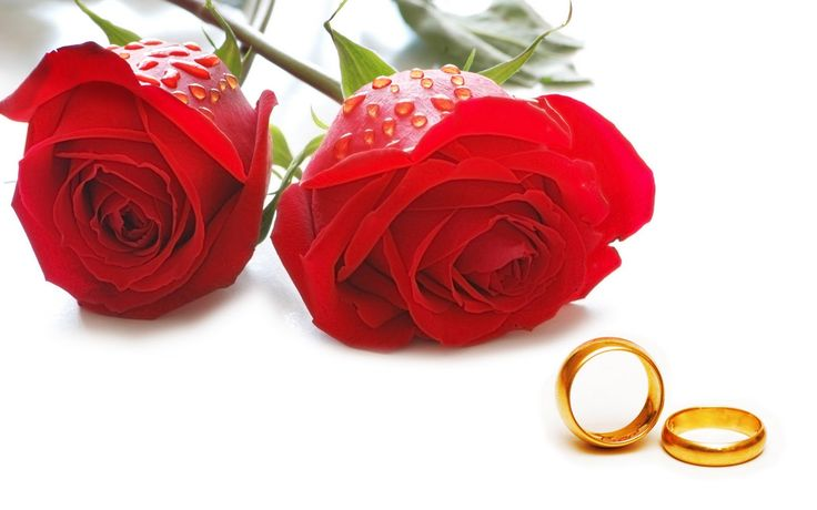 Happy Rose Day 2017 Pictures - SMS, Wishes Wallpapers, Images Download :  Here we provide you latest collection of happy rose day sms, rose...