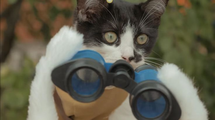 Cats vs Zombies? Now This Is Funny!