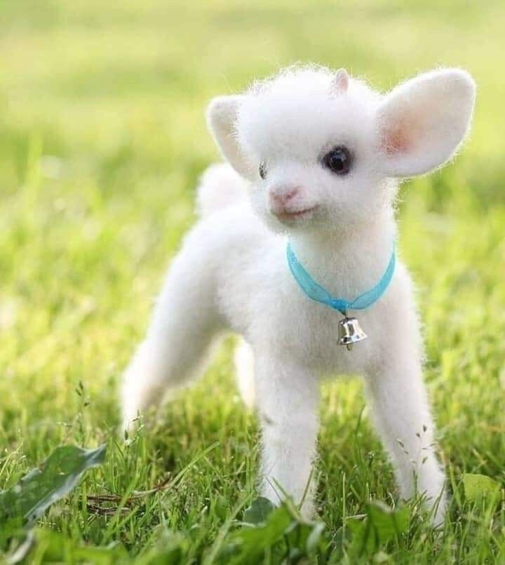 Pin By Annie S Treasures On Adorable Baby Animals Funny Baby Animals Pictures Baby Animals Super Cute