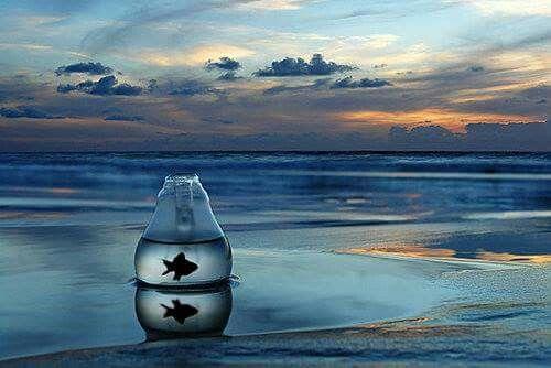 Olmadı, Aşkı Anlatamadım Sana.  Fakat Sen de Haklısın, Akvaryum Balığı Ne Bilsin Okyanusu..