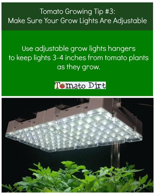 39 best images about Tomato Growing Tips on Pinterest ...