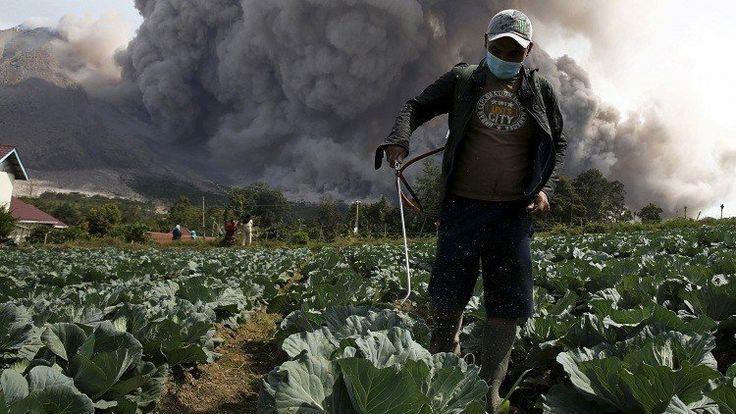 Las multinacionales que se benefician de la venta de productos químicos como pesticidas, utilizados en la agricultura, se han enfrentado a un golpe duro propinado por…