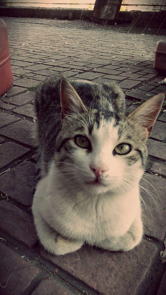 https://flic.kr/p/UhgjNa | Cat
