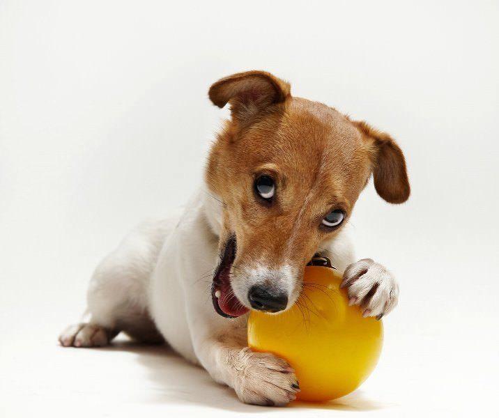 Порода собаки из фильма Маска (50 фото): взрослый Джек ...