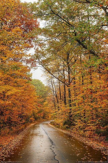 Autumn Canopy and Leaves by Greg from Maine, via Flickr