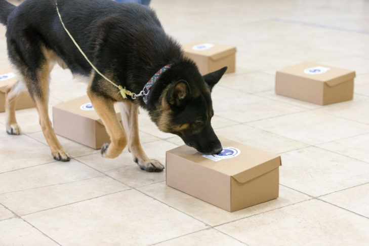 How To Keep Your Dog Entertained Indoors Dogs Best Dogs German