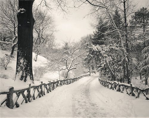 Central Park Winter: Grab your snowshoes and walk through the snow in Central Park during a snowstorm. This is the Shakespeare Garden in the park in New York City.
