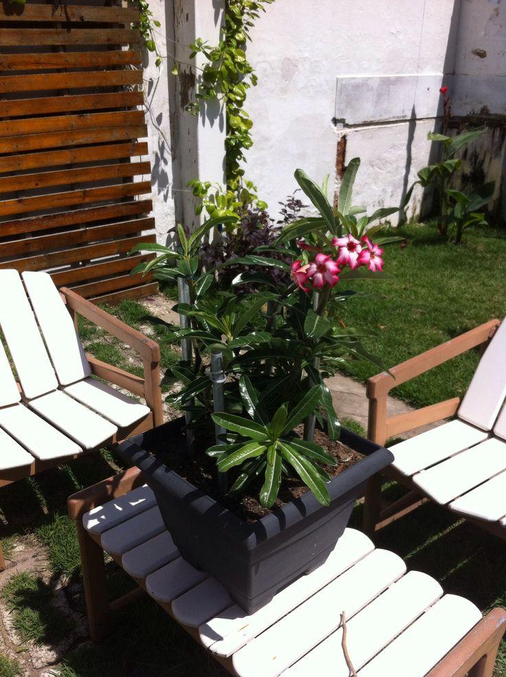 Jardim, Casa dos Mamede.