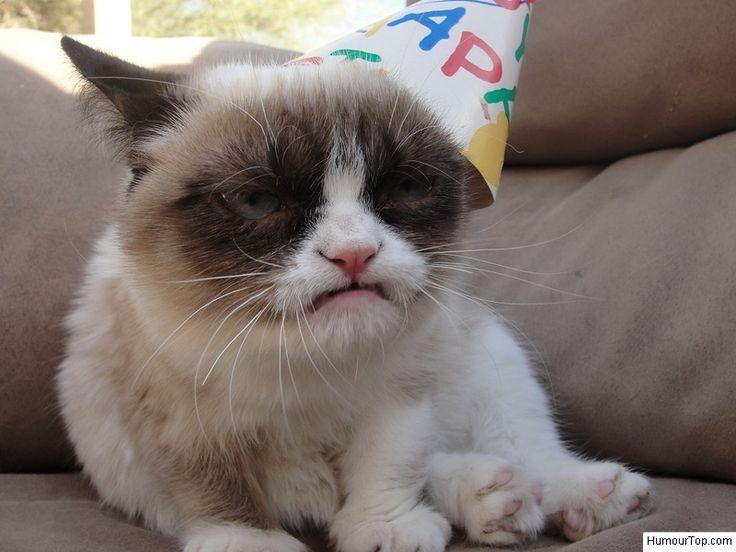 Tard déteste les anniversaires !