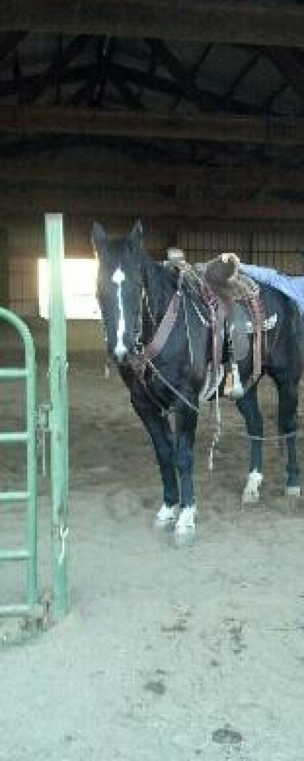 Rope Horse For Sale