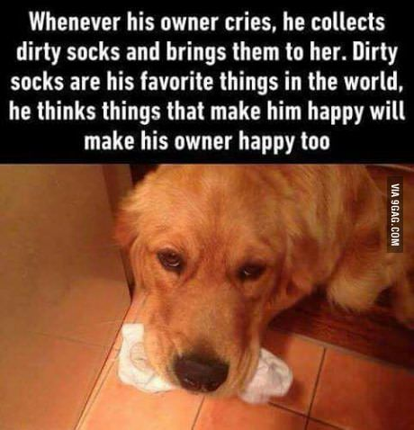 We actually don't deserve dogs.