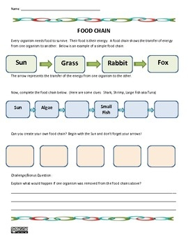 Printables Food Chain Worksheet 1000 images about food chain on pinterest great horned owl 4th science worksheet