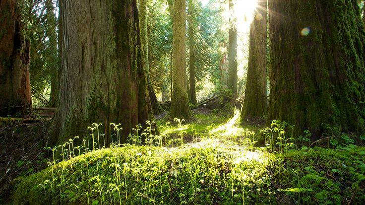 Parque Nacional del Monte Rainier: Información de Parque Nacional del Monte Rainier en Seattle (y alrededores), Estados Unidos   Expedia.mx