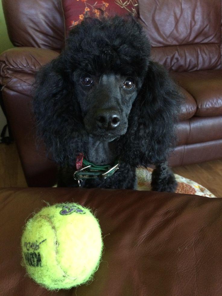 throw my ball please