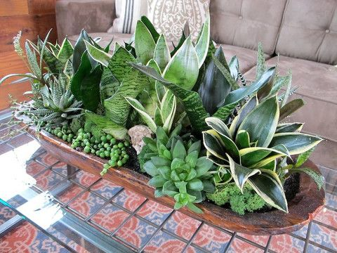 Low Light Succulent Planter.  Love the idea of using a dough bowl as the planter!
