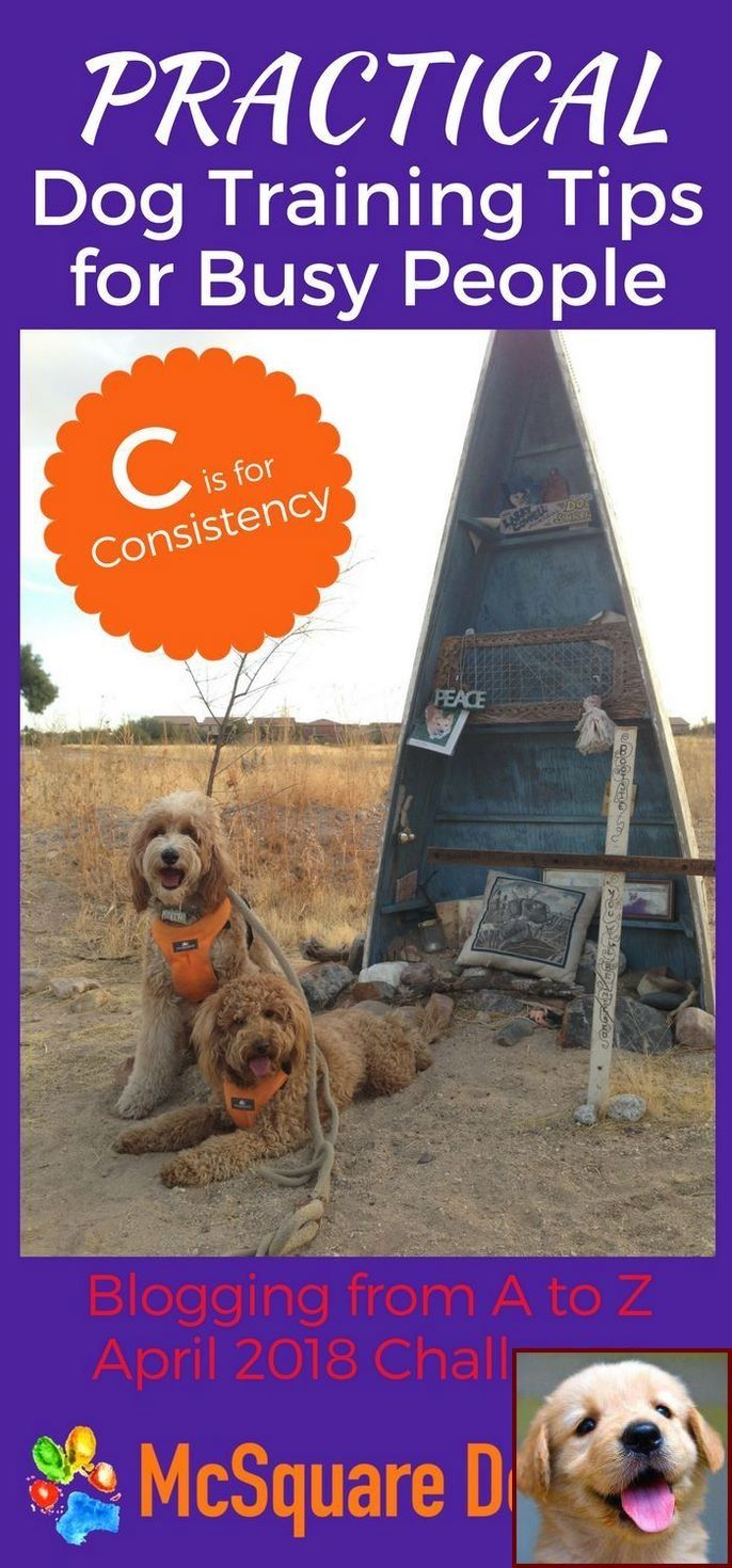 Dog Behavior Quizlet And Dog Training Courses In India Dog