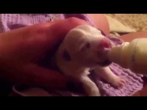 Bottle feeding a 2 days old puppy (Moonlight Haze Bird Creek)