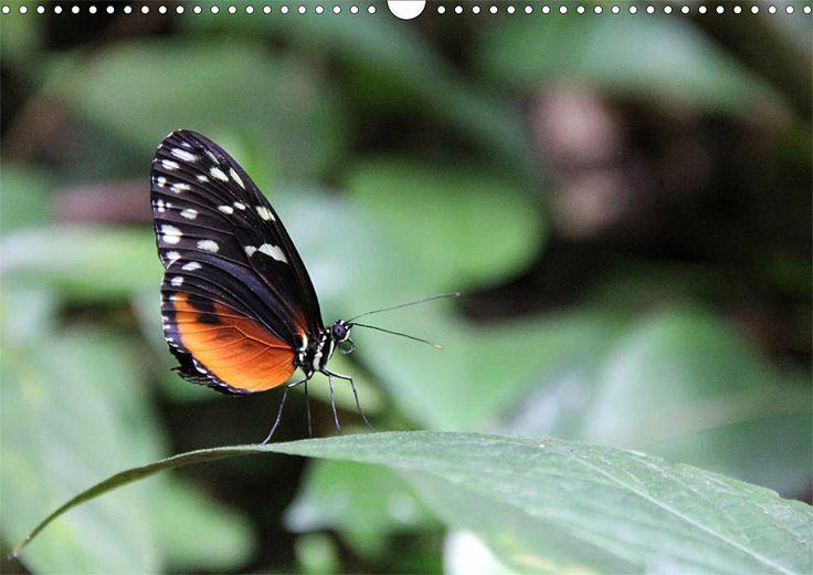 """Tier-Posterbuch """"Schmetterlinge der Tropen"""", Seite 10"""