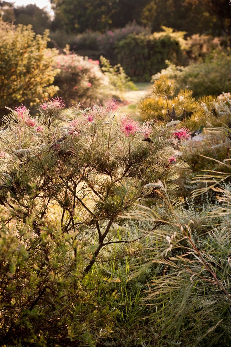 The 1498 Best Australian Native Gardens Images On