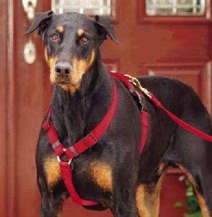arnes / pechera ajustable para perro grande