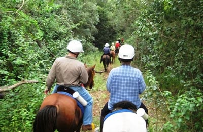 Guided Horse Trek through spectacular farm land and rainforest in Mary Valley WIth Mary Valley Adventure Trails   #airnzsunshine