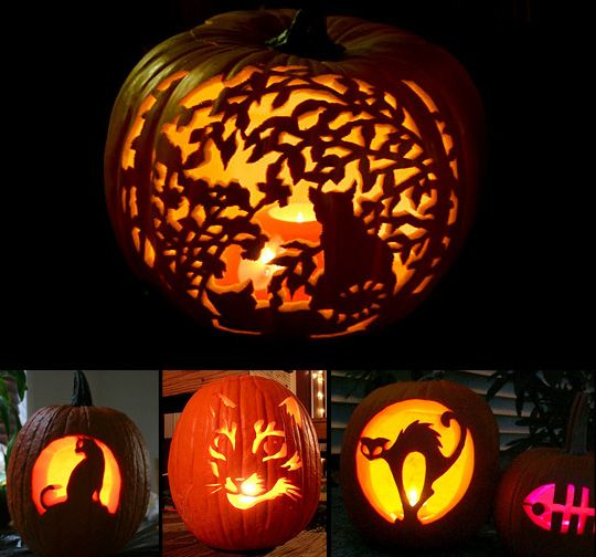 Best ideas about cat pumpkin carving on pinterest