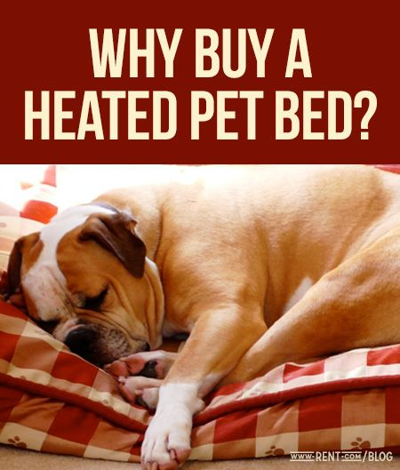 Why buy a heated pet bed? Find out on The Shared Wall blog from Rent.com.
