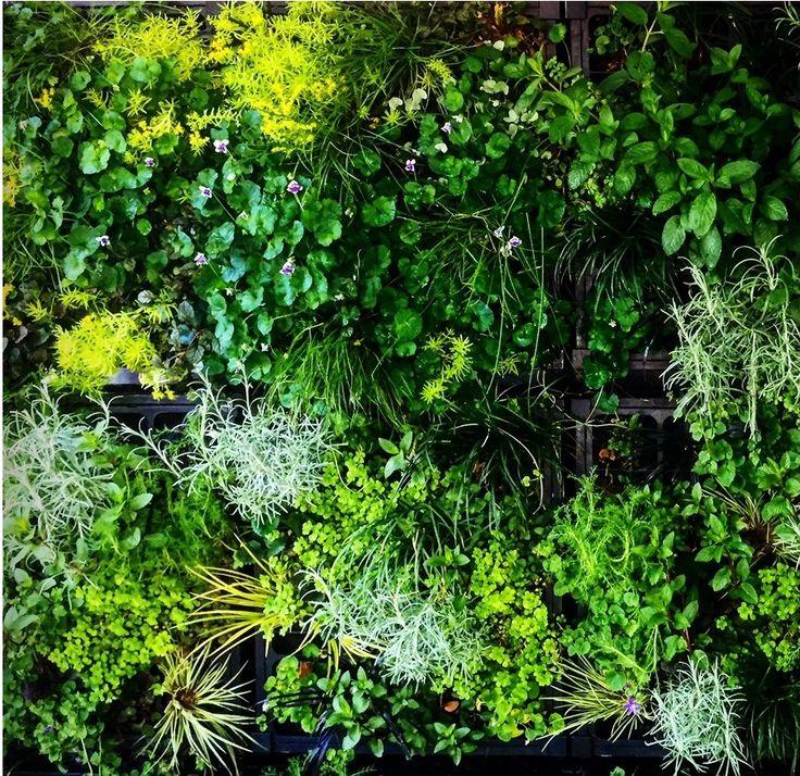 Green Wall, Vertical Garden, Herb Wall