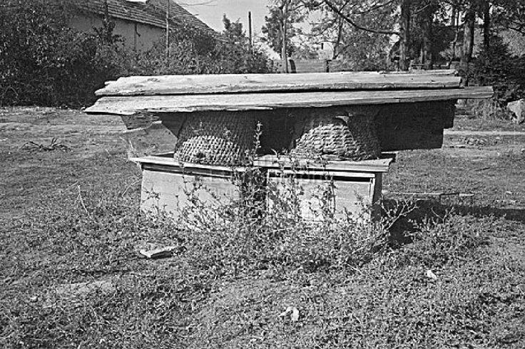 Réger Endre FőcímMéhes Alcím Tartalmi leírásEgy volt uradalmi cseléd méhese. Készítés ideje1950.10. Készítés helyeTiszaigar     Heves vm.     Magyarország