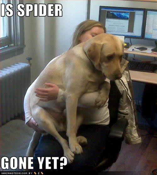 big goof! hahahSpiders, Funny Dogs Pics, Silly Dogs, Dogs Photos, Funny Dogs Pictures, Dogs Funny, Big Dogs, Animal, Pets Products