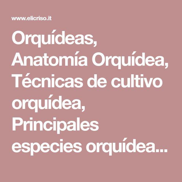 Orquídeas, Anatomía Orquídea, Técnicas de cultivo orquídea, Principales especies orquídeas, Orquídea, Flor orquídea, Hojas orquídeas, Fuste orquídeas
