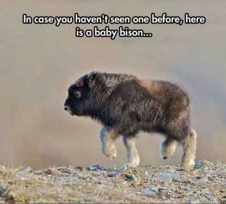 27 Funny Baby Animals
