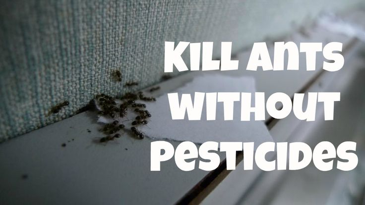 Here you will get ideas on how to kill ants without pesticides. get rid of ant in your house today. When you open your cabinets and see ants swarming your spilled sugar it might be tempting to use strong chemicals to take them all out as soon as possible. However pesticides are unhealthy for humans pets and other beneficial creatures you might want hanging around your property. The good news is that there are so many highly effective ways to kill ants without pesticides that there's really…