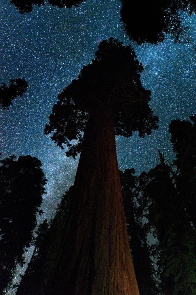 Sequia National Park    Giant Sequoia and the Milky Way - Sequoia National Park, California - Justin Kern   This image seems timeless. It could have been photographed last night or hundreds of millions of years ago (if cameras were available then). Ironicall