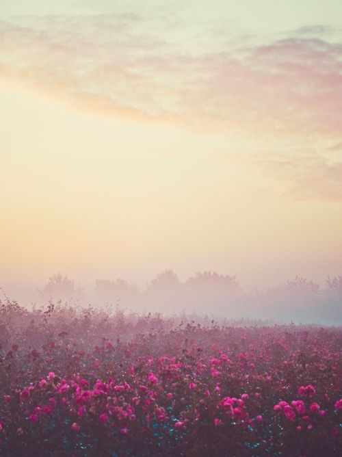 hazy landscape photograph of fushia flowers and soft pink, peach and light lavender sky