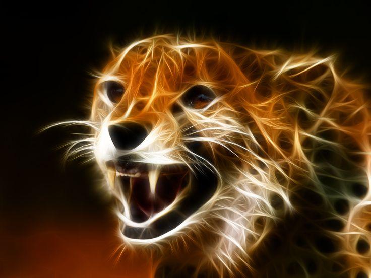 cat-1+[DesktopNexus.jpg (1600×1200)
