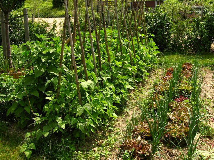 Plus de 1000 id es propos de potager en carr s sur for Amenagement jardin potager