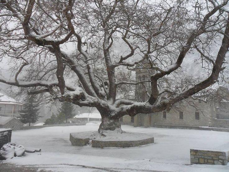 Ο κεντρικός πλάτανος του χωριού Αγία Παρασκευή (Κεράσοβο), στο φετινό χειμωνιάτικο σκηνικό. (Κόνιτσα, Ήπειρος, Ελλάδα)