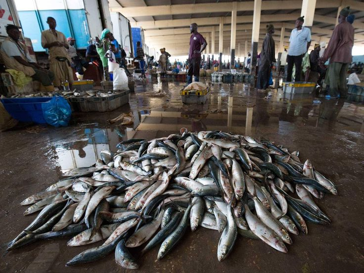 How vital fish stocks in Africa are being stolen from human mouths to feed pigs and chickens on Western factory farms