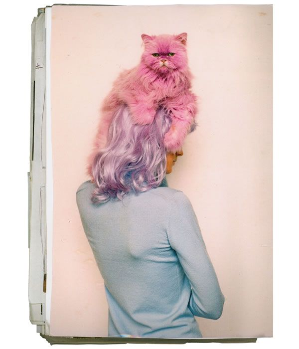 I have no idea how I feel about this pink cat hat thing ... must we dye our animals?