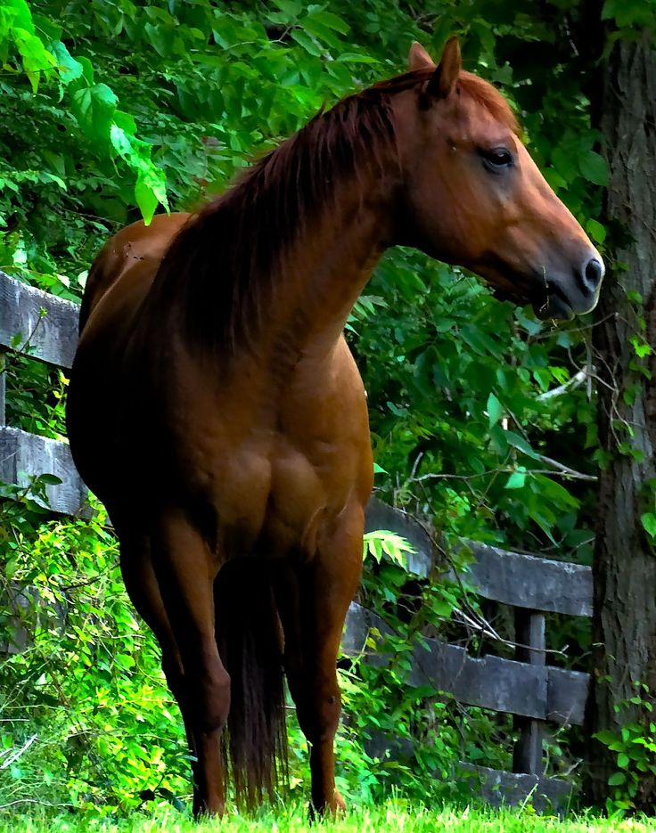 When you live in horse country, this is what your neighbors looks like.  - by Tony Karp – http://timuseum.com