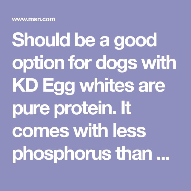 Should be a good option for dogs with KD Egg whites are pure protein. It comes with less phosphorus than other protein sources such as egg yolk or meats. The proteins provided by egg whites are high in quality, which means that they will produce less urea nitrogen products in comparison to plant proteins. Maintaining good nutrition status help people with chronic kidney disease to maintain good nutrition status & resist infections, according to Kidney Cares Community.