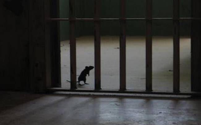 Ο Μίκι Μάους «βαποράκι» στις φυλακές της Βραζιλίας (video)