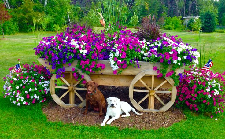 Want beautiful flowers this year? Use our fertilizer for flowers that show! Go to: www.BeatYourNeigh... Wave Rave petunias