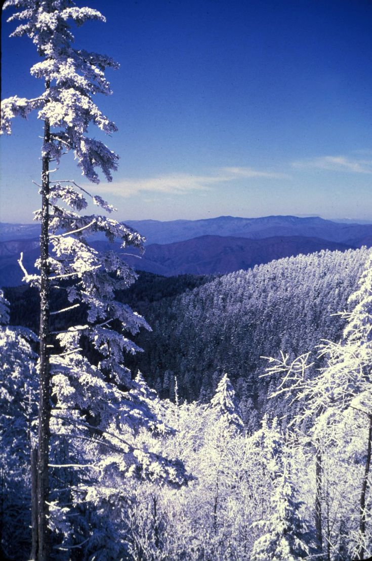 Great Smoky Mountains National Park   Frosted trees in winter