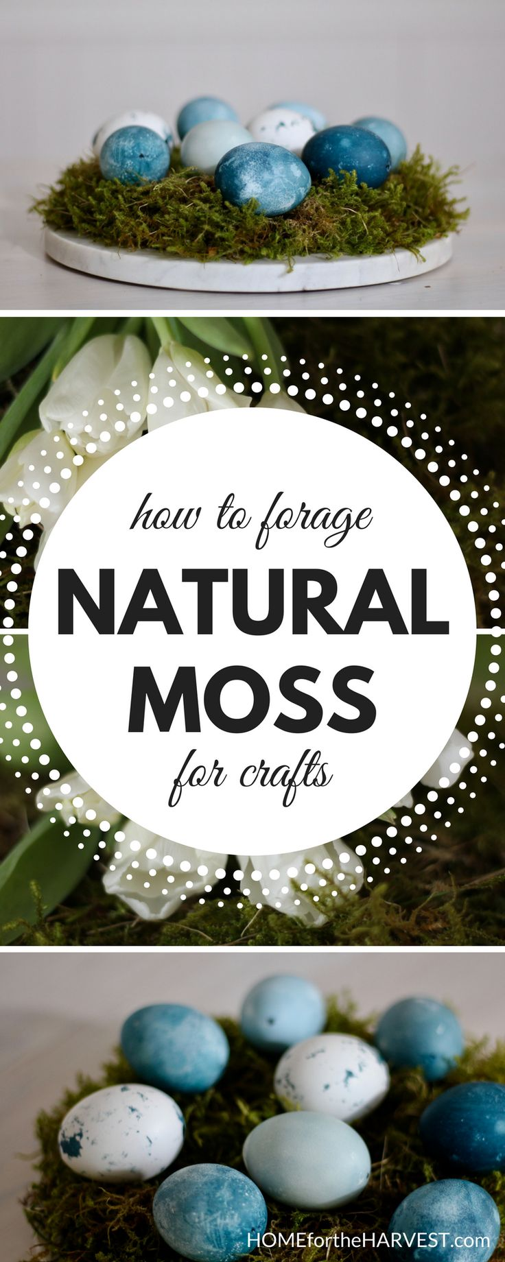 How to find and collect moss for use in DIY home decor and crafts | Home for the Harvest