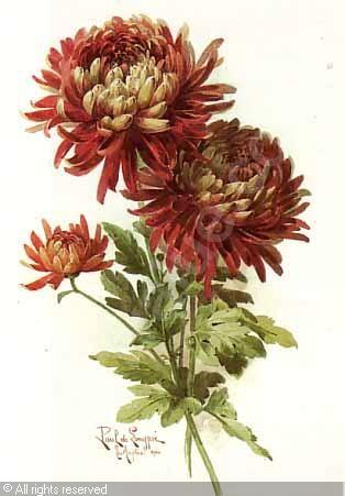 Paul de Longpré: Chrysanthemums - botanical illustration (brown Japanese Chrysanthemums)