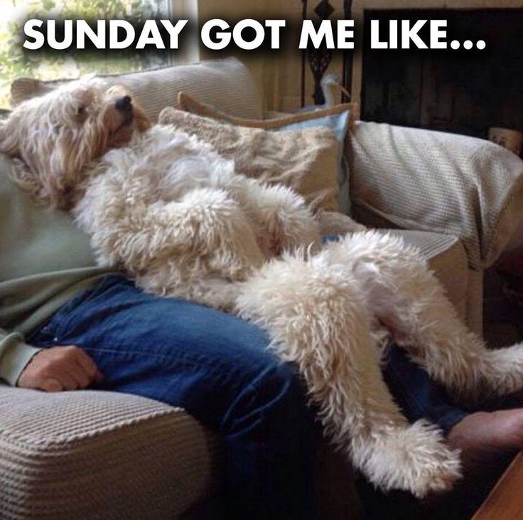 Funny dog sunday memes - http://jokideo.com/funny-dog-sunday-memes/
